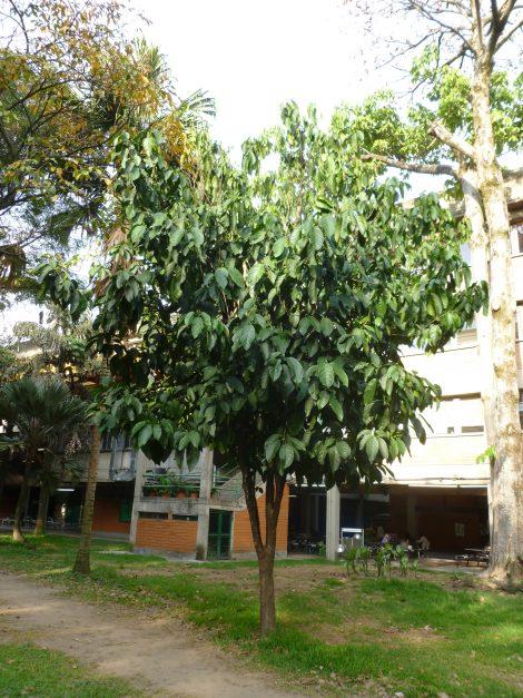 Fundación Ezwama